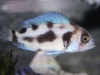 Freshwater-Fish-for-Sale-NJ_WN03
