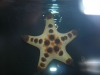 Chocolate Chip Star