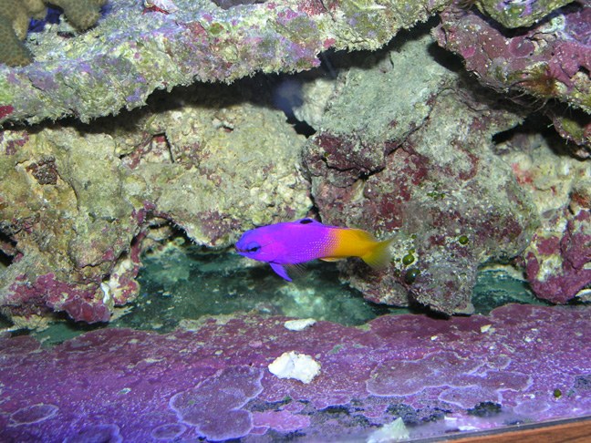 Clifton Fish Aquarium : Absolutely Fish Photo Gallery - Grammas & Bassletts