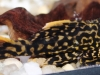 Tropical-Fish-for-Sale-NJ-WN25