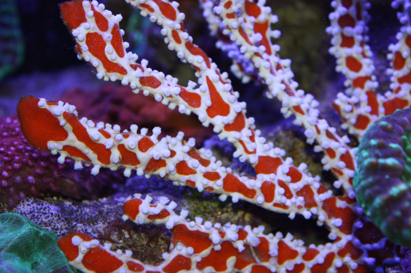 Absolutely Fish Photo Gallery - Misc Invertebrate