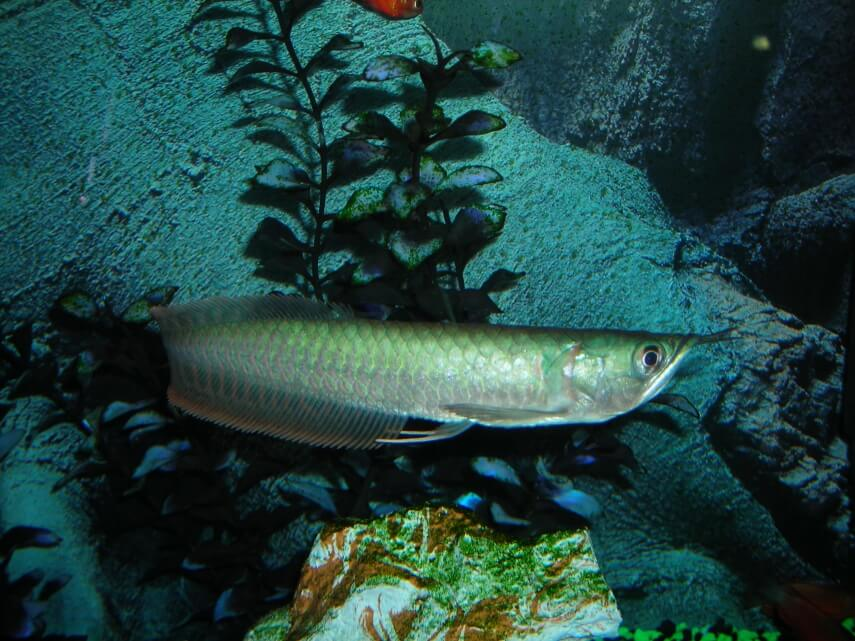 Fish aquarium in nj marine fish for sale in new jersey for Saltwater fish sale