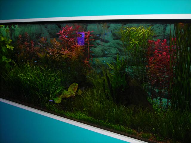 Tropical Fish Aquarium Plants - New Jersey supplier of reef aquarium