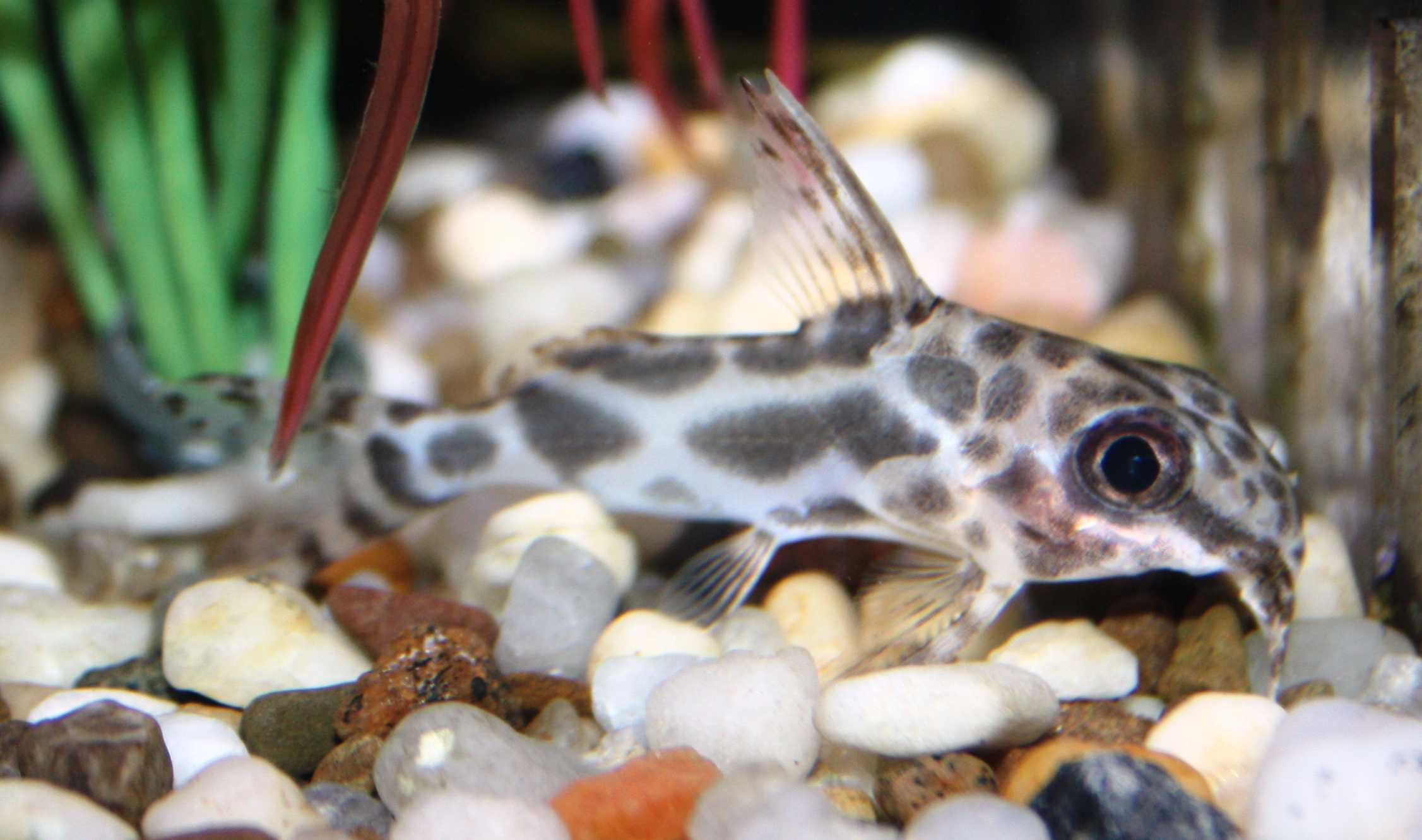 Freshwater fish for sale freshwater fish for sale for Tropical fish for sale online