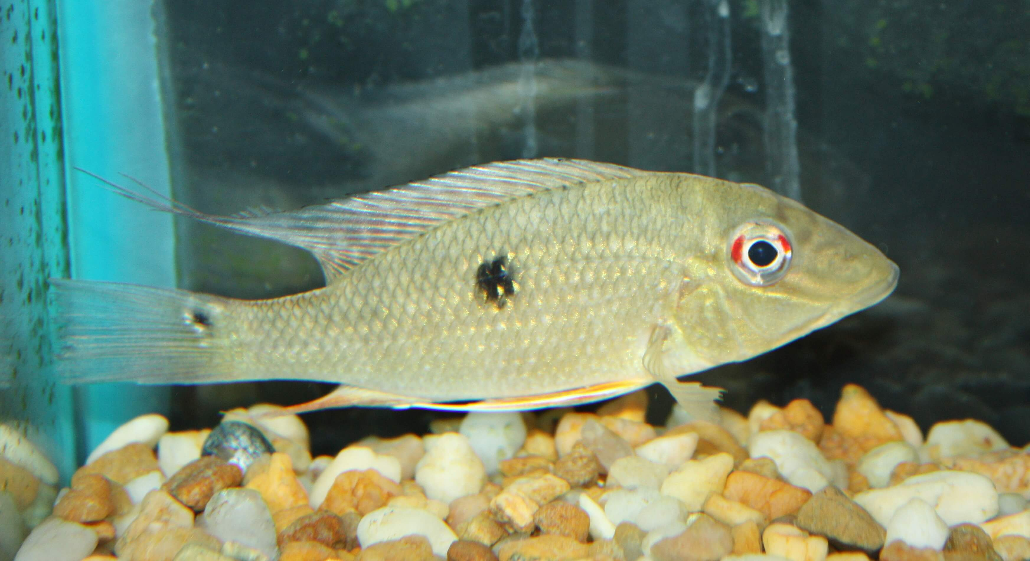 Live pond fish for sale house of fishery lovers for Garden pond fish for sale