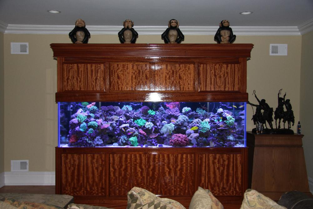 Absolutely Fish Aquarium Maintenance Services In New Jersey