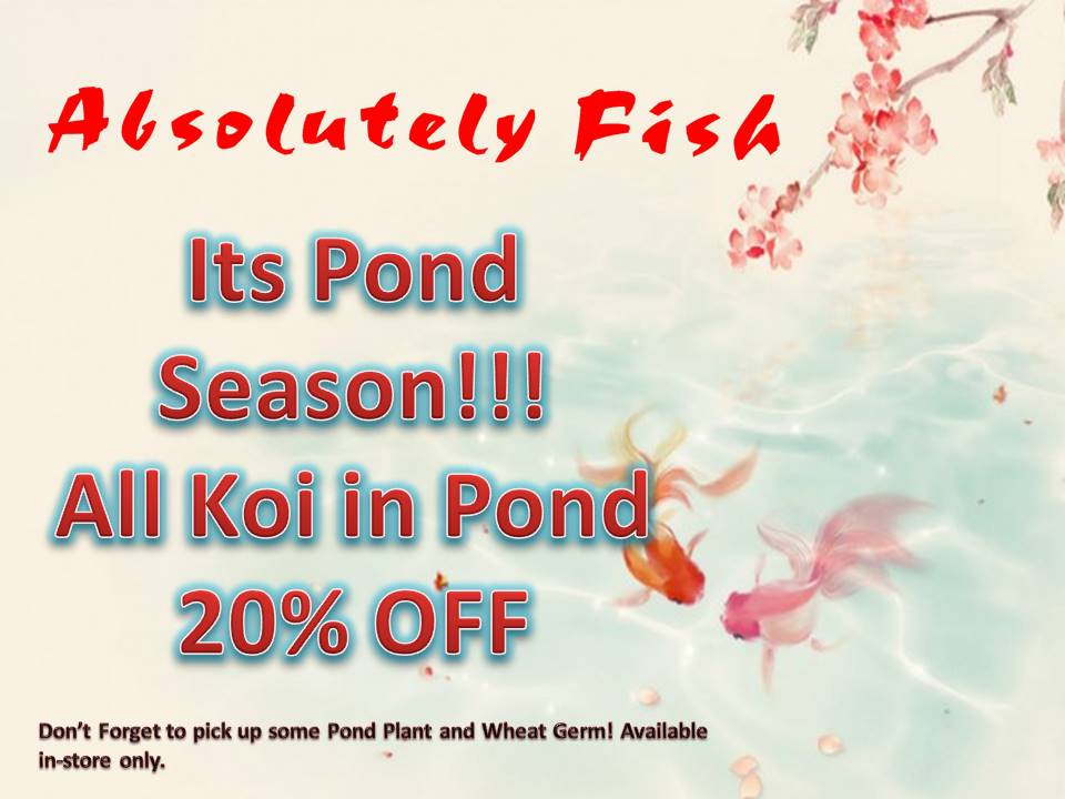 Past events at absolutely fish in clifton new jersey for Koi fish for sale nj