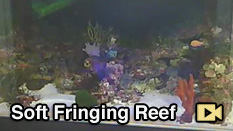 Soft Fringing Reef Camera