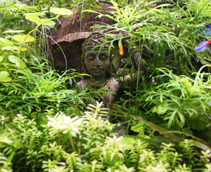 Looking for Natural Aquariums and Live Aquatic Plants to Buy?