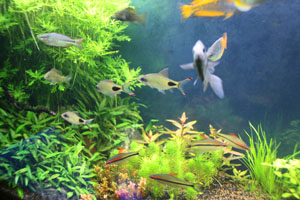 Find the best Natural Aquariums and Live Aquatic Plants to Buy
