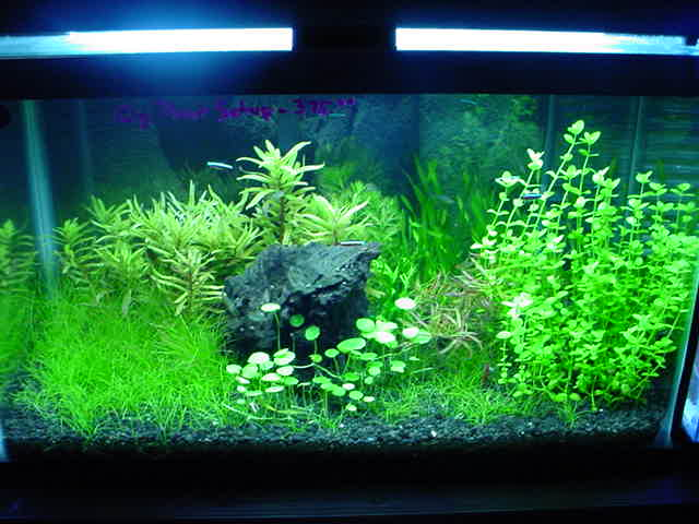 Absolutely fish articles natural aquariums and planted for Natural fish tank