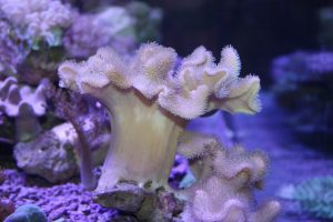 Corals for sale Clifton, NJ