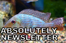 absolutely-newsletter