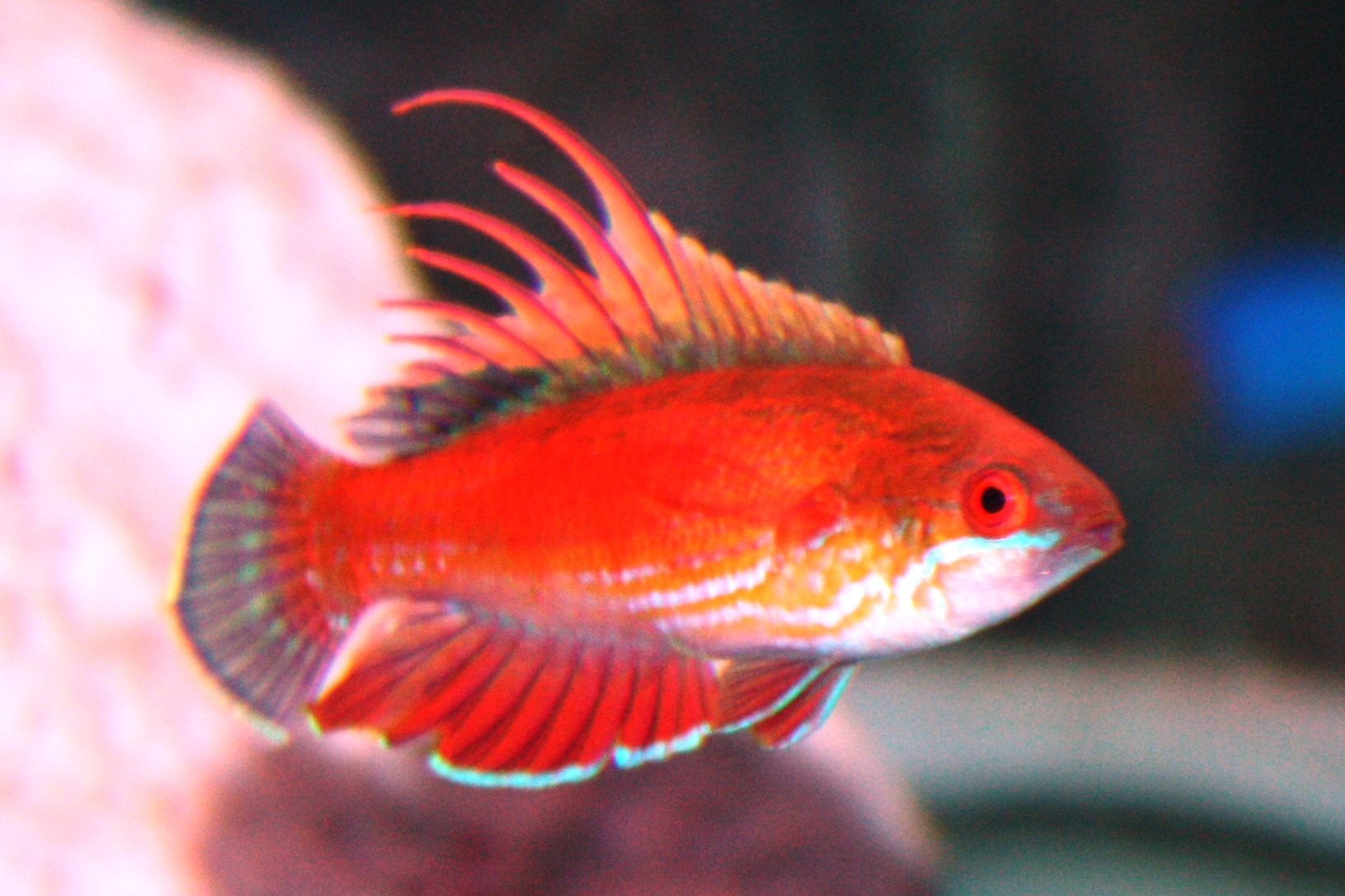 absolutely fish blogs saltwater fish for sale