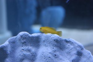 Nano Reef Fish For Sale NJ