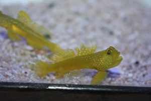 Nano Reef Fish For Sale NJ Watchmen