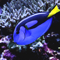 Keeping Dory and Responsible Fish Care