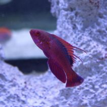 Most Popular Marine Fish to Buy in 2016