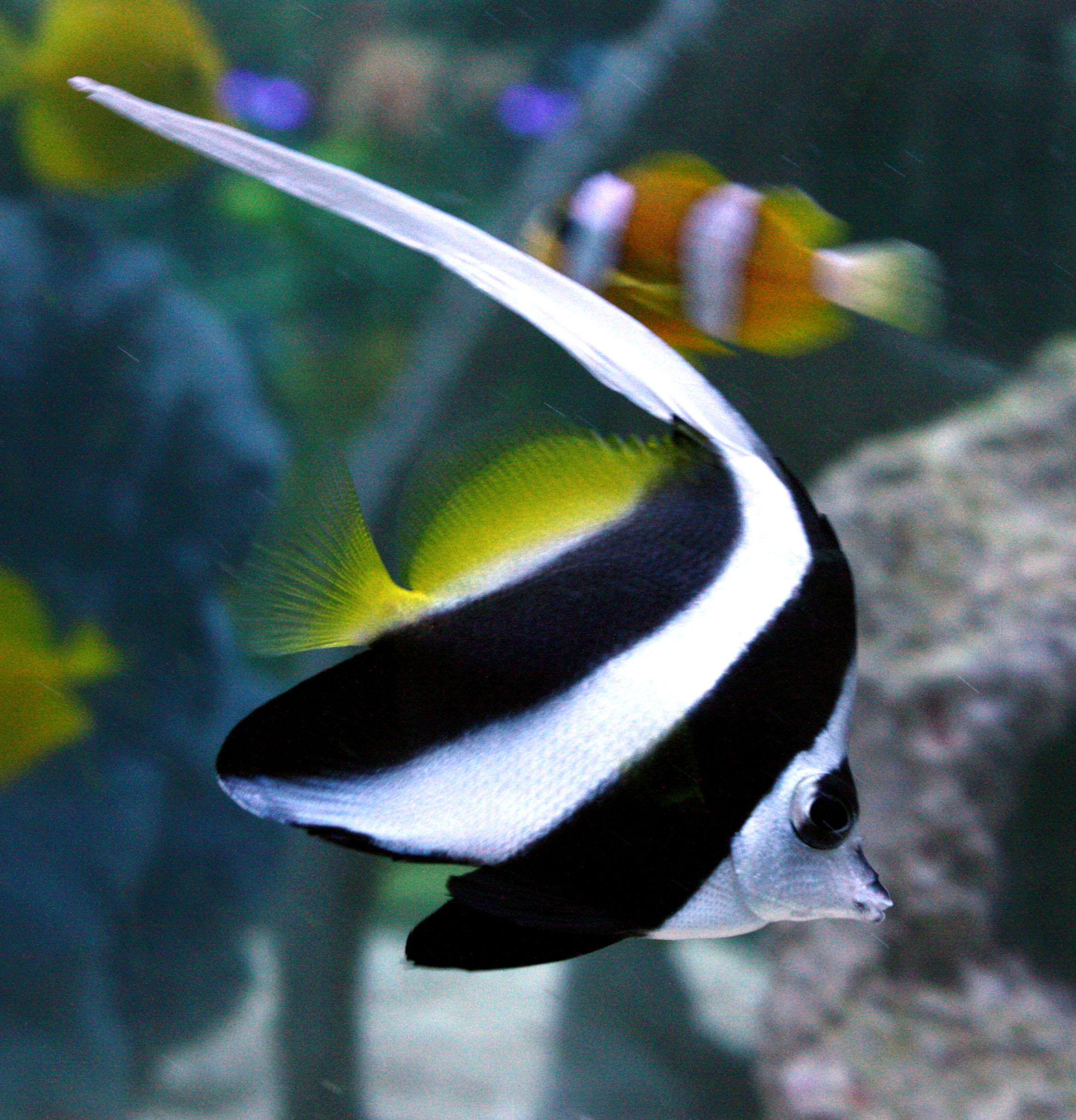 Absolutely Fish | Most Popular Marine Fish in 2016 ...