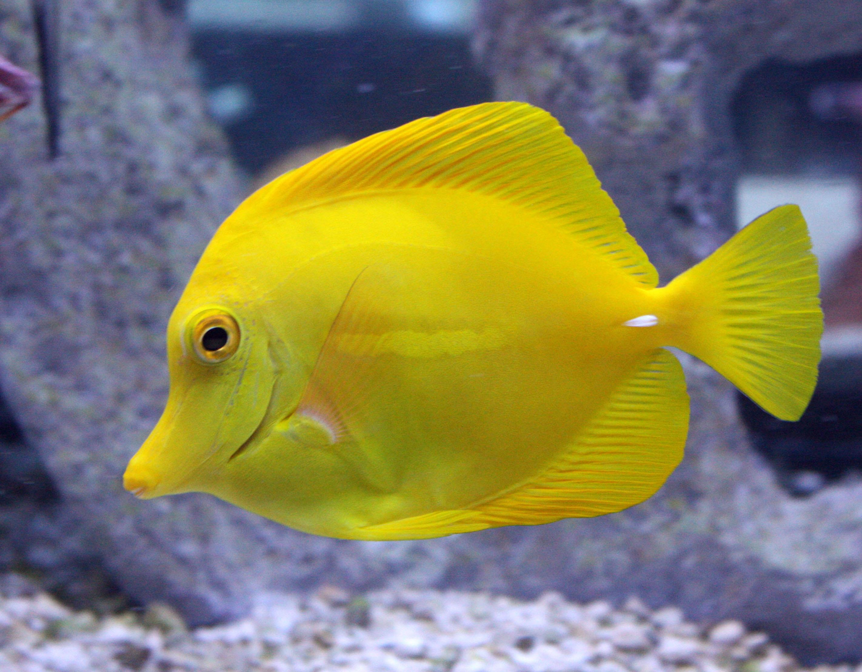 Absolutely fish most popular marine fish in 2016 for Popular saltwater fish
