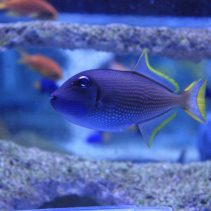 Most Popular Large Marine Fish Bought in 2016