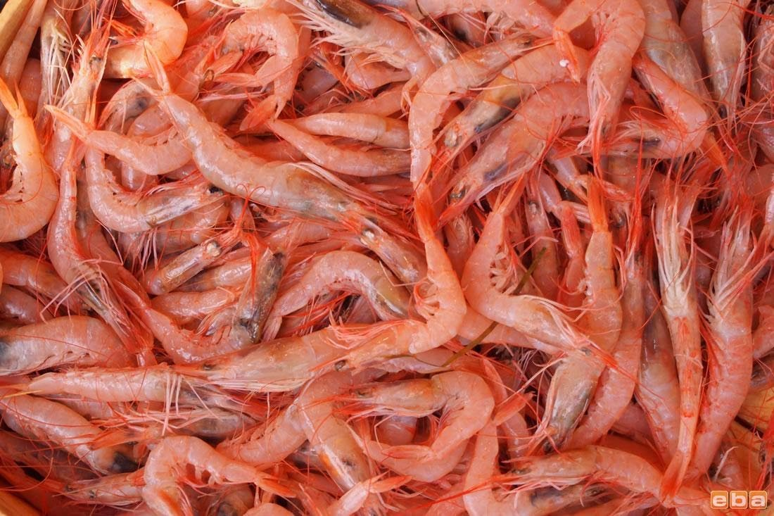 Absolutely Fish | Live foods to buy, New Jersey ...